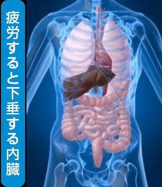 下垂する内臓